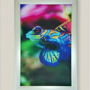 tropical fish on non-lit frame